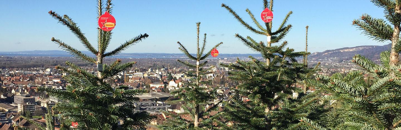 ... der Christbaum aus der Region